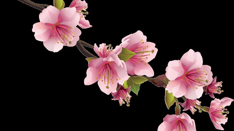 сезон Весна в китайской медицине